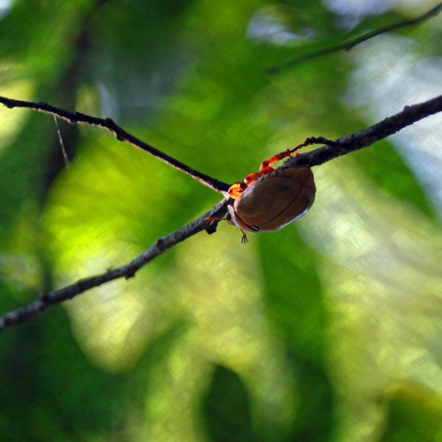 June Bug!