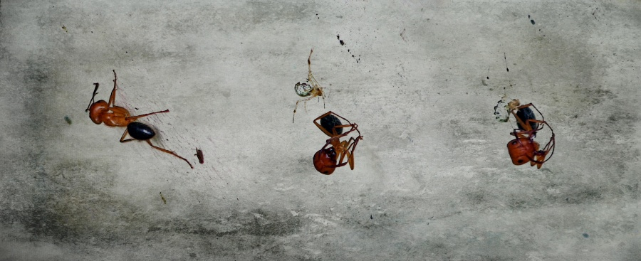 The Ant and the Spider Triptych